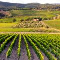 <!--:fr-->La conservation des vins…<!--:-->
