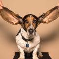 Acoustique : vos oreilles vous trompent !